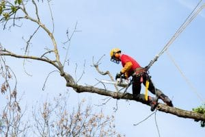 Tree Removal and Logging Is Dangerous Work